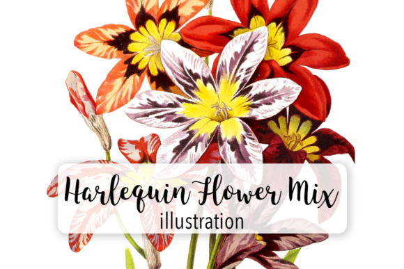 Herlequin Flower Mix Watercolor Graphic Illustrations By Enliven Designs