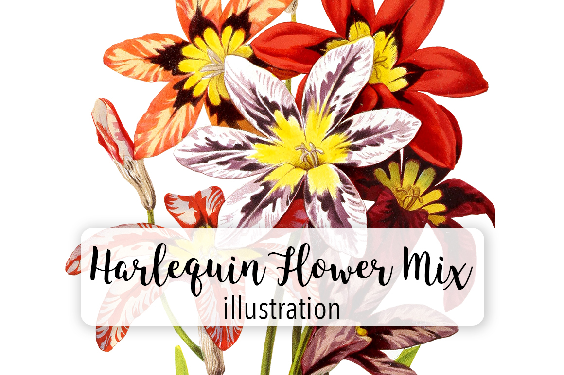 Download Free Herlequin Flower Mix Watercolor Graphic By Enliven Designs for Cricut Explore, Silhouette and other cutting machines.