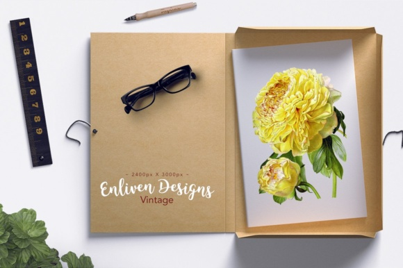 Hybrid Delavay Peonies Graphic Illustrations By Enliven Designs - Image 2