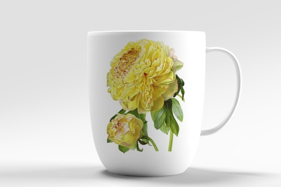 Hybrid Delavay Peonies Graphic Illustrations By Enliven Designs - Image 6