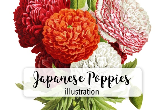 Japanese Poppies Watercolor Graphic Illustrations By Enliven Designs