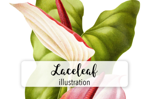 Laceleaf Watercolor Graphic Illustrations By Enliven Designs