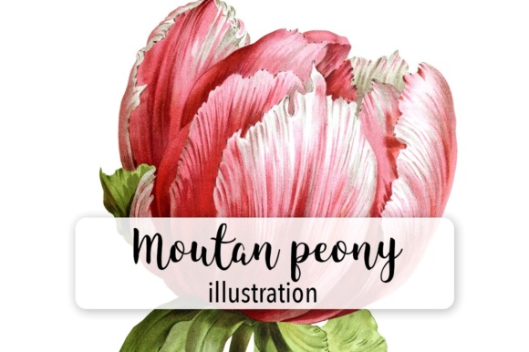 Mountan Peony Watercolor Graphic Illustrations By Enliven Designs