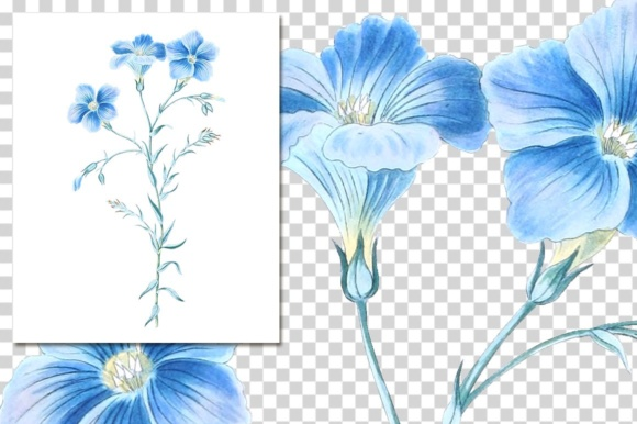 Narbonne Flax Watercolor Graphic Illustrations By Enliven Designs - Image 3