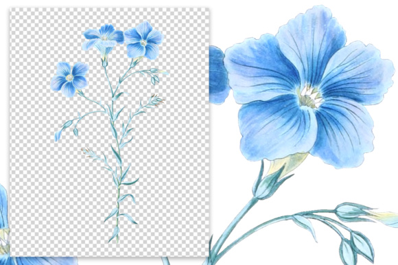 Narbonne Flax Watercolor Graphic Illustrations By Enliven Designs - Image 5