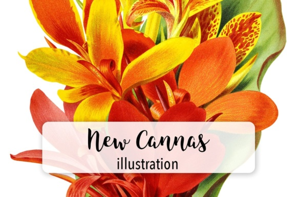 New Cannas Watercolor Graphic Illustrations By Enliven Designs