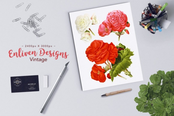 Download Free New Multiflorous Begonia Watercolor Graphic By Enliven Designs for Cricut Explore, Silhouette and other cutting machines.