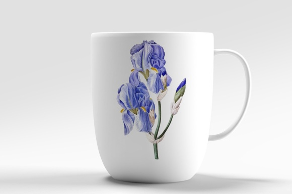 Pale Iris Watercolor Graphic Preview