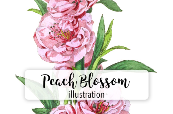 Peach Blossom Double Flowers Watercolor Graphic Illustrations By Enliven Designs