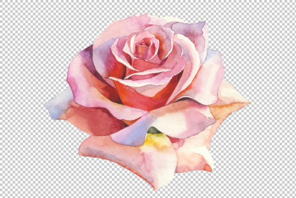Print on Demand: Pink Roses Realistic Watercolor Set Grafik Illustrationen von MyStocks