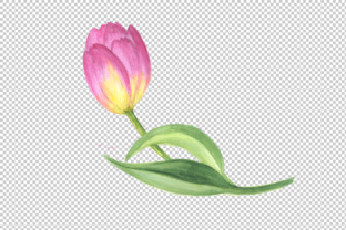 Pink Tulip PNG Watercolor Design Set Graphic By MyStocks