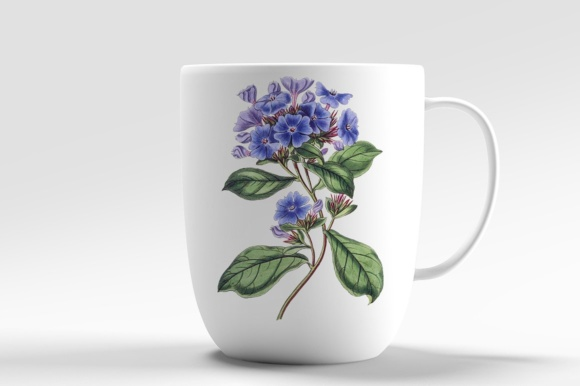 Plumbago Watercolor Graphic Illustrations By Enliven Designs - Image 2