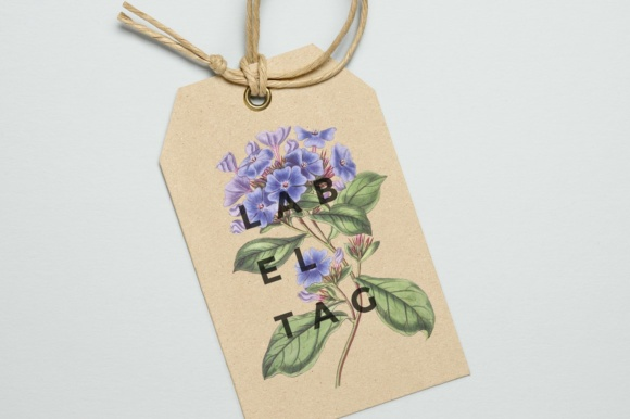 Plumbago Watercolor Graphic Illustrations By Enliven Designs - Image 3