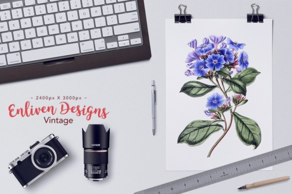 Plumbago Watercolor Graphic Illustrations By Enliven Designs - Image 5