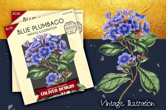 Plumbago Watercolor Graphic Illustrations By Enliven Designs - Image 6