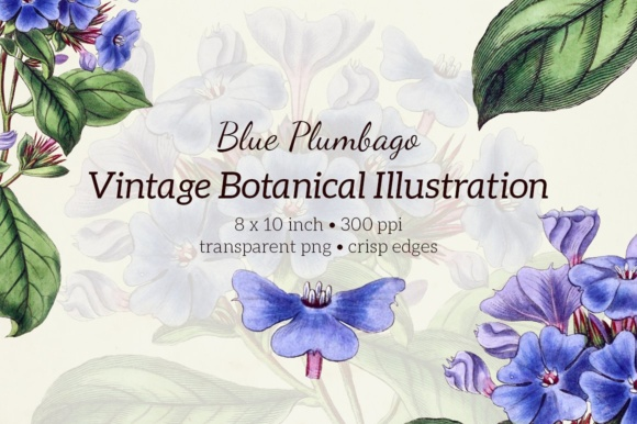 Plumbago Watercolor Graphic Illustrations By Enliven Designs - Image 7