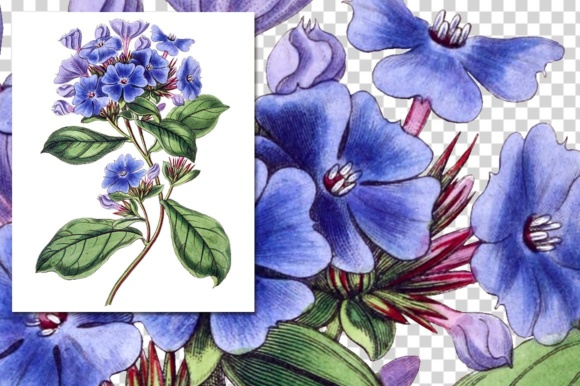 Plumbago Watercolor Graphic Illustrations By Enliven Designs - Image 8