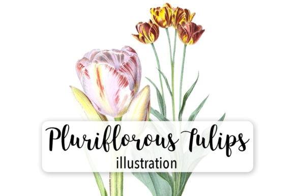 Pluriflorous Tulips Watercolor Graphic Illustrations By Enliven Designs