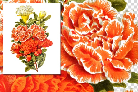 Pomegranate and Grenadier Watercolor Flowers Graphic Item