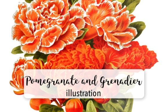 Pomegranate and Grenadier Watercolor Flowers Graphic