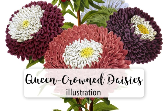 Queen Crowned Daisies Watercolor Graphic Illustrations By Enliven Designs