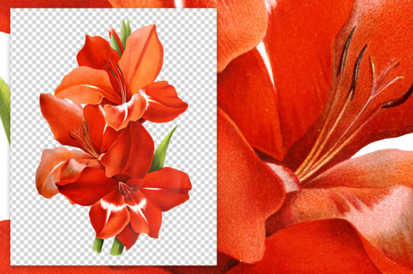 Red Gladiolus Graphic Illustrations By Enliven Designs - Image 2