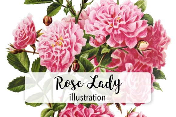 Rose Lady Watercolor Graphic Illustrations By Enliven Designs