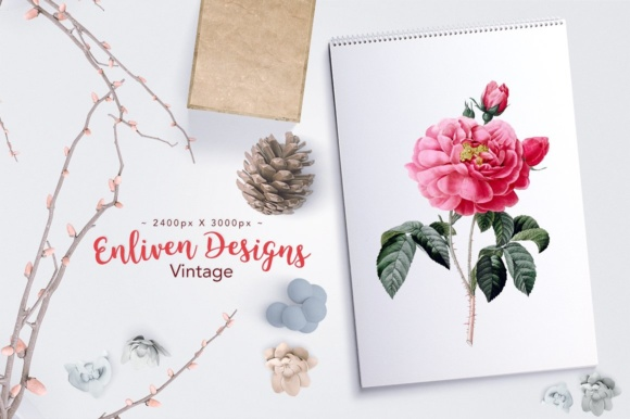 Rose of Orleans Watercolor Graphic Illustrations By Enliven Designs - Image 2