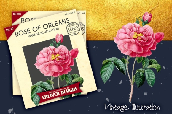 Rose of Orleans Watercolor Graphic Illustrations By Enliven Designs - Image 3