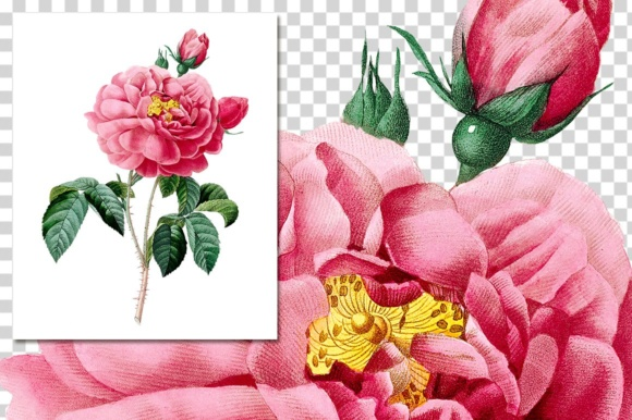 Rose of Orleans Watercolor Graphic Illustrations By Enliven Designs - Image 4