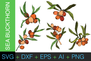 Download Free Sea Buckthorn Or Seaberry Svg Vector Set Graphic By Mystocks for Cricut Explore, Silhouette and other cutting machines.