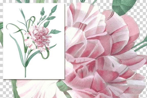 Single Carnation Watercolor Graphic Illustrations By Enliven Designs - Image 5