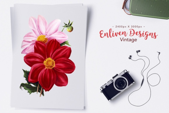 Download Free Single Colored Dahlia Watercolor Graphic By Enliven Designs for Cricut Explore, Silhouette and other cutting machines.