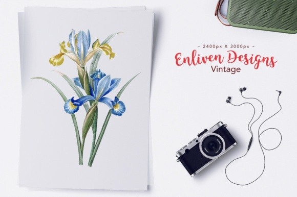 Download Free Spanish Iris Watercolor Graphic By Enliven Designs Creative for Cricut Explore, Silhouette and other cutting machines.