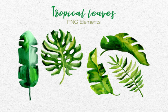 Succulent Tropical Leaves PNG Watercolor Set Graphic By MyStocks Image 8