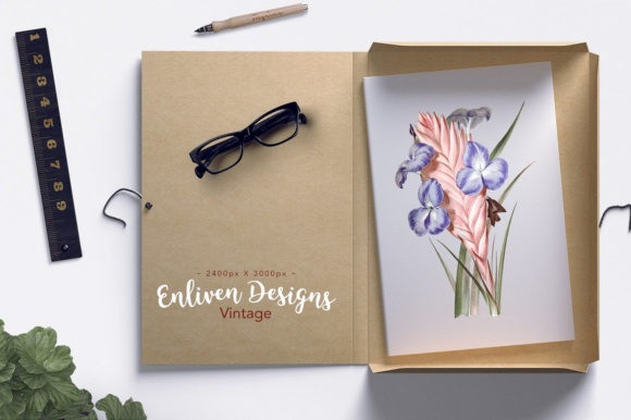Tricolor Tillandsia Lindenii Air Plant Watercolor Graphic Illustrations By Enliven Designs - Image 2