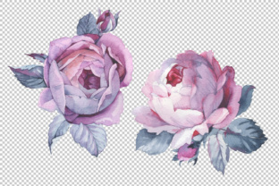 Two Pink Roses PNG Watercolor Set Graphic By MyStocks