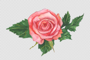 Two Red Roses PNG Watercolor Set Graphic By MyStocks