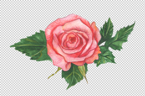 Two Red Roses Png Watercolor Set Graphic By Mystocks Creative Fabrica