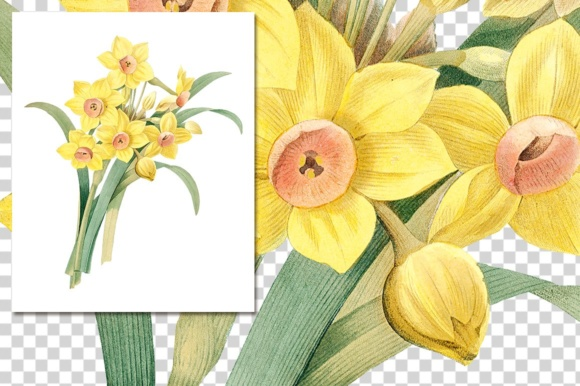 Yellow Daffodil Watercolor Flower Graphic Illustrations By Enliven Designs - Image 3