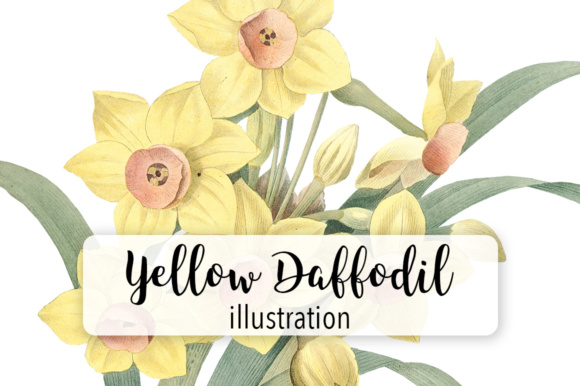 Yellow Daffodil Watercolor Flower Graphic Illustrations By Enliven Designs - Image 1