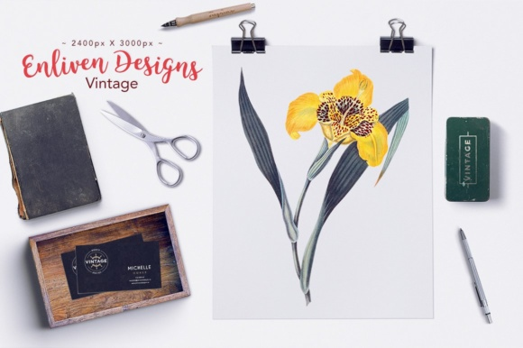 Yellow Flowered Tigridia Graphic Illustrations By Enliven Designs - Image 2