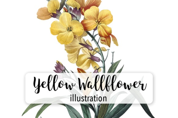 Yellow Wallflower Graphic Illustrations By Enliven Designs