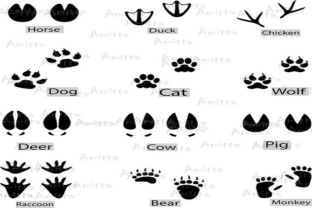 Download Free 12 Different Animal Footprints Clipart Grafico Por Amitta for Cricut Explore, Silhouette and other cutting machines.