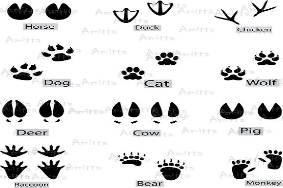 Print on Demand: 12 Different Animal Footprints Clipart Graphic Illustrations By Amitta