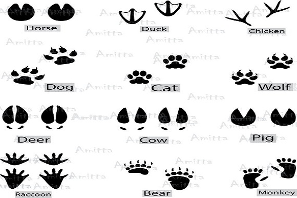 12 Different Animal Footprints Clipart (Graphic) by Amitta ...