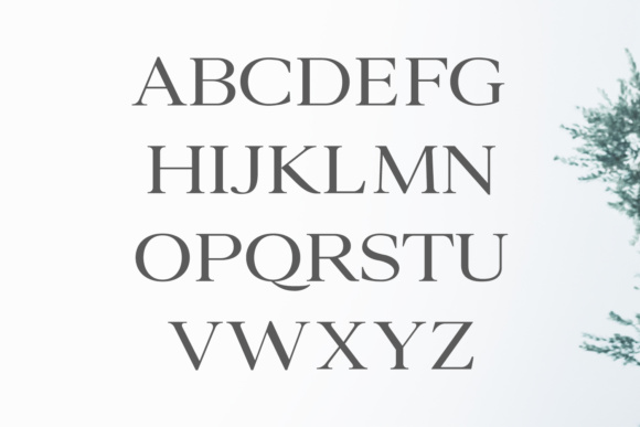 Print on Demand: Ammar Family Serif Font By Creative Tacos - Image 2