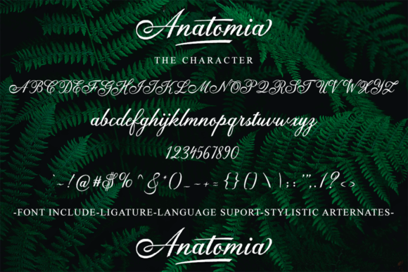 Anatomia Script Font By DoeL Creative Image 9