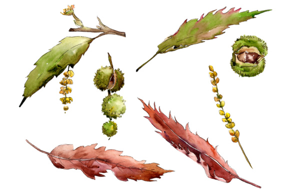 Download Free Autumn Chestnut Png Watercolor Plant Set Graphic By Mystocks for Cricut Explore, Silhouette and other cutting machines.