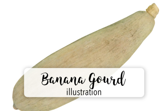 Banana Gourd Graphic Illustrations By Enliven Designs